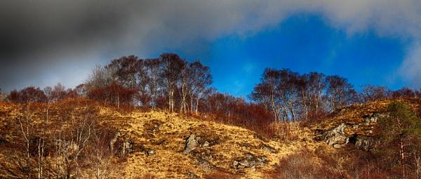 TREE HILL by SOUL7
