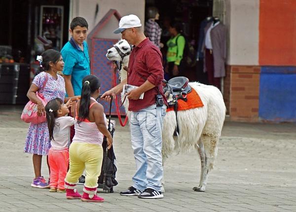Llama At The Village Fair by Pitter