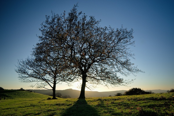 Newtimber Hill by alfpics