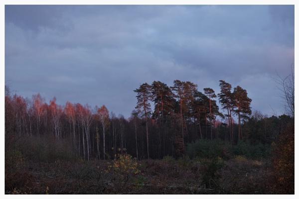 Autumnal Gleam Series #9 by PentaxBro