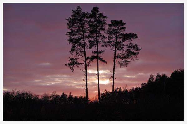 Autumnal Gleam Series #10 by PentaxBro
