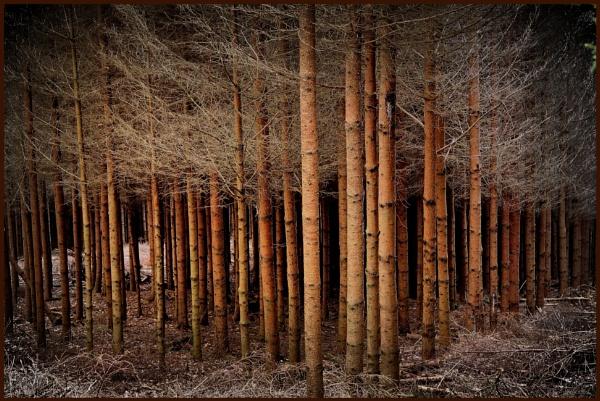 Frozen Trees by kw