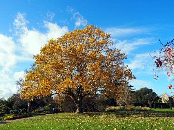 the beauty of autumn by derekd