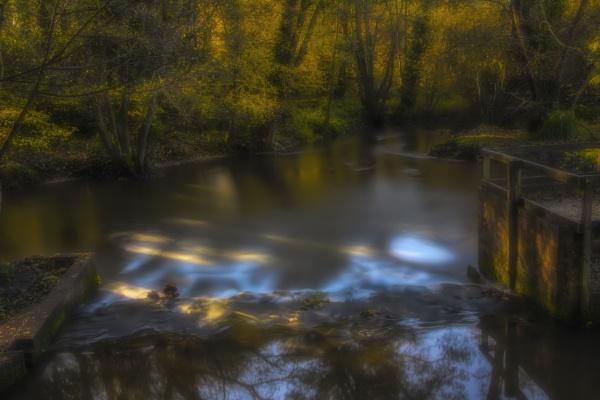 Wickham water meadow. 3