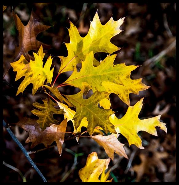 Oak bouquet by rambler