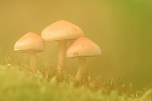 creamy mushrooms by olafo