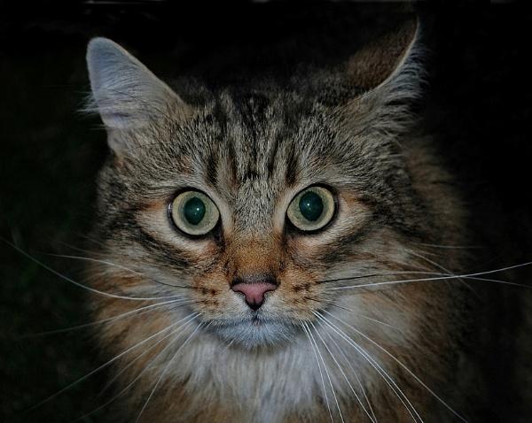 Cat Alert by sweetpea62