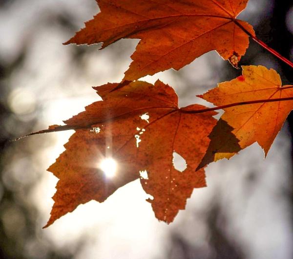 Autumn Light by manicam