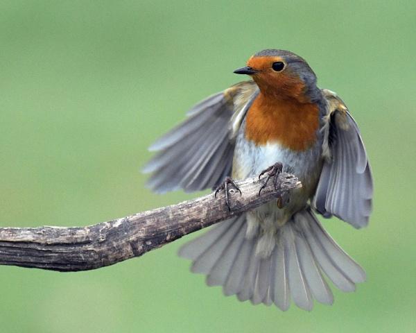 Yay Robins! by Holmewood