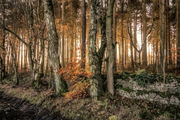 Woodland light by BillRookery
