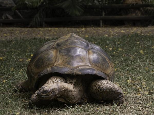 AldabraTortoise by Wireworkzzz