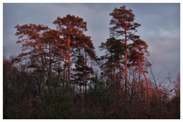 Autumnal Gleam Series #13 by PentaxBro