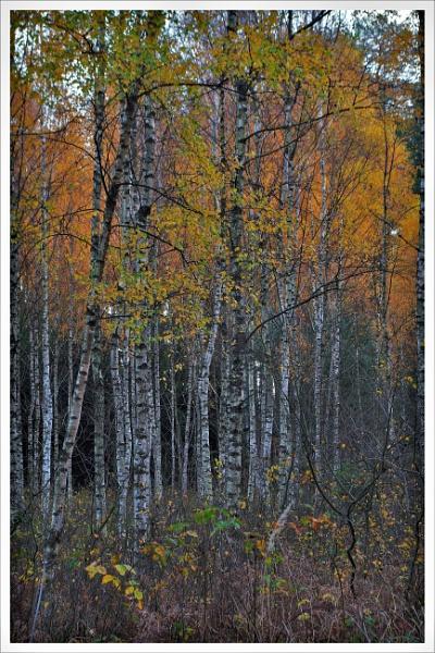 Autumnal Gleam Series #14 by PentaxBro