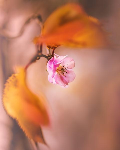 ...autumn bloom by KristinaZvinakeviciute