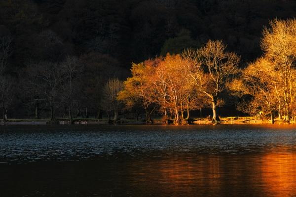 Spot Light by chris-p