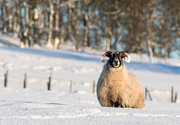 Wooly Jumper by ww2spitfire