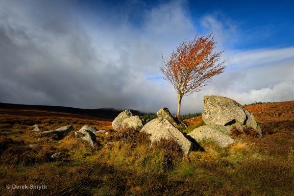 Tree On The Rocks by Porthos