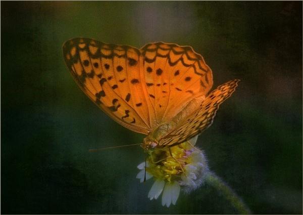 Amber Glow by sweetpea62