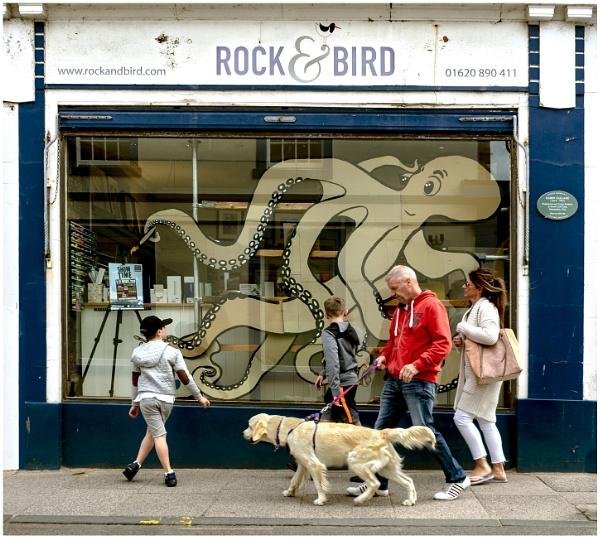 Rock & Bird by mac