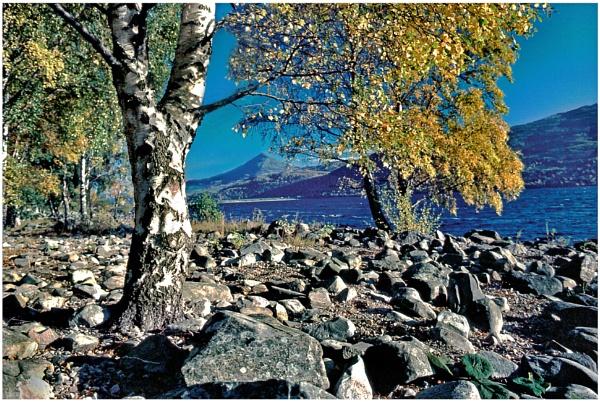 Autumn, Rannoch by mac