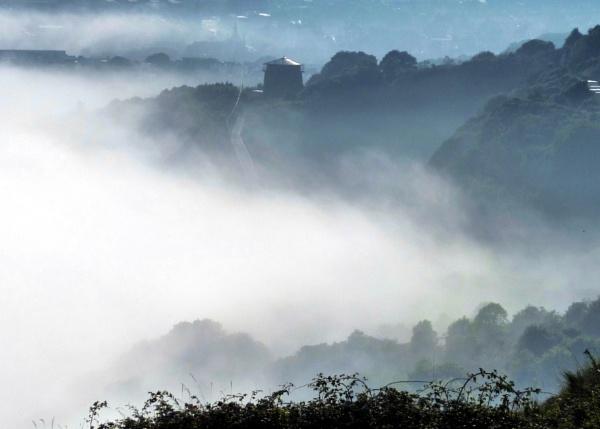 Foggy by MUMCAT