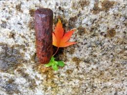 Autumn in Gloucester