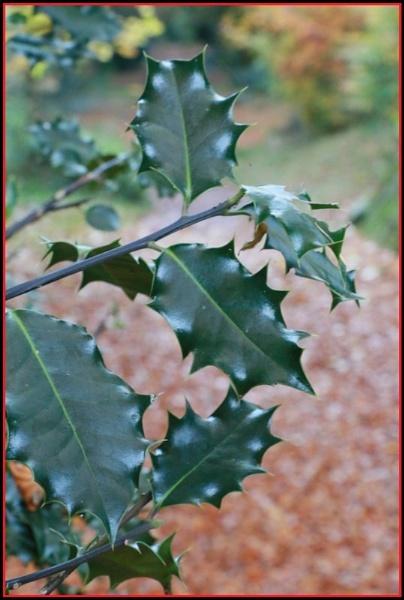 Holly by gunner44