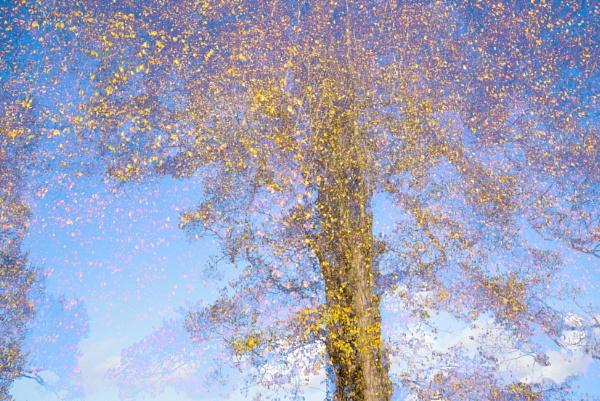 Dissonant Tree by alfpics