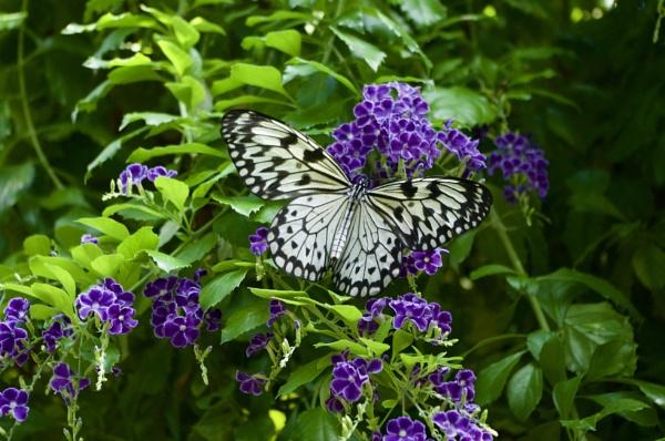 Butterfly by Rosie77