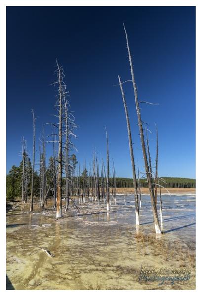 Petrified Trees by IainHamer