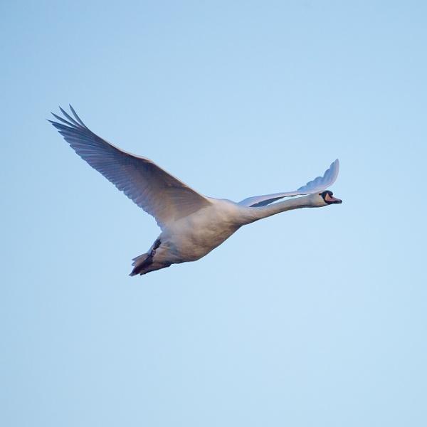 I Love To fly by chensuriashi