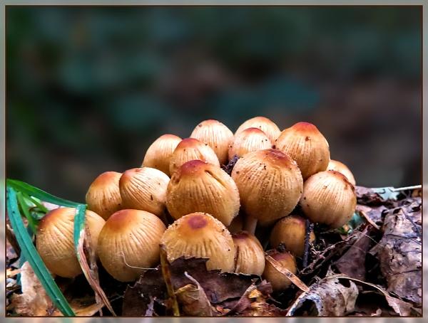 Sherwood Fungi by Sylviwhalley
