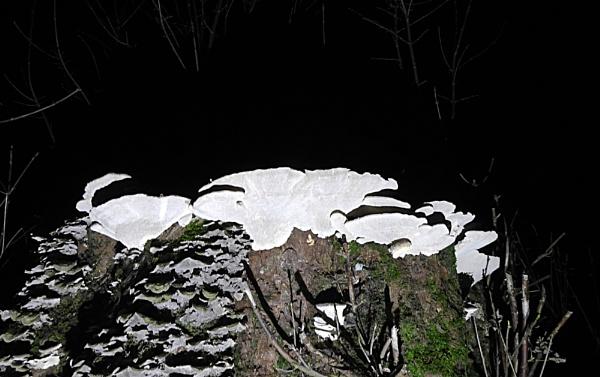 Fungi At Night by mikejmb