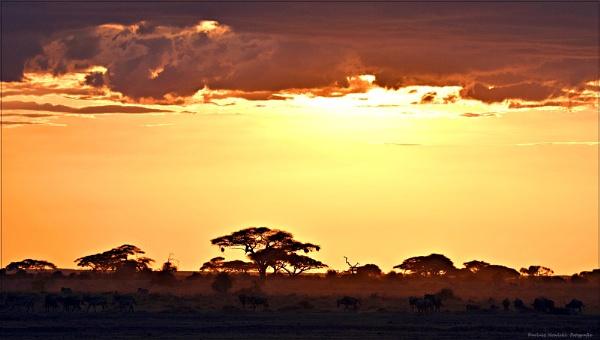 sawanna- Amboseli N P by papajedi