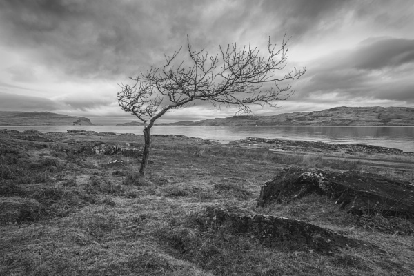Winter on Mull by pink