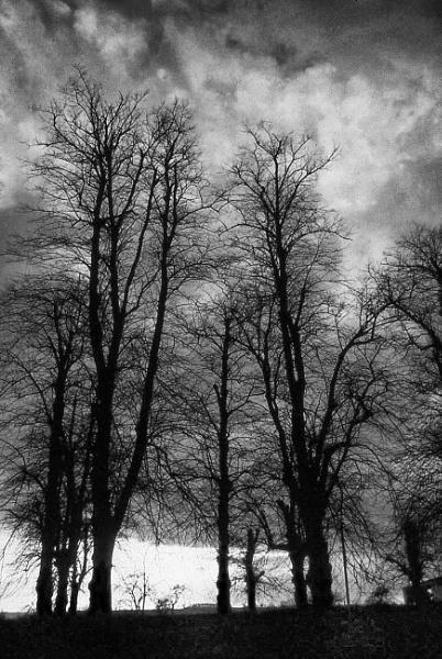 Tree Silhouette by Lontano