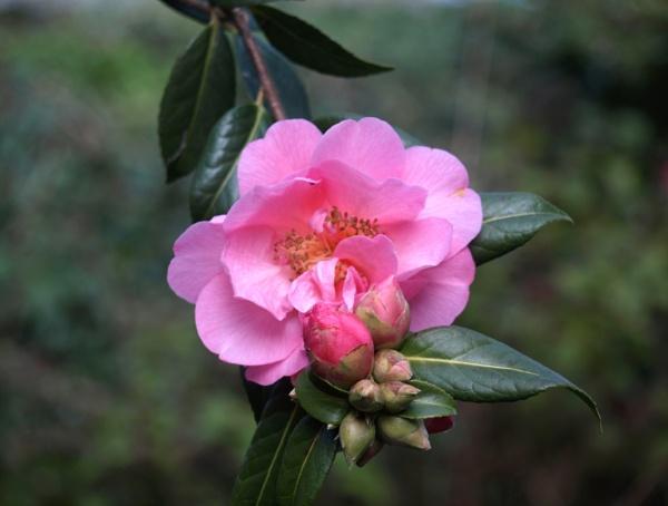 To bloom soon by JuBarney