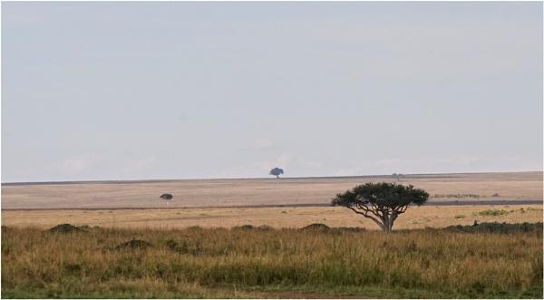 The Masai Mara by notsuigeneris