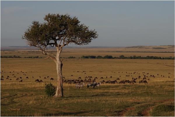 Masai Mara by notsuigeneris