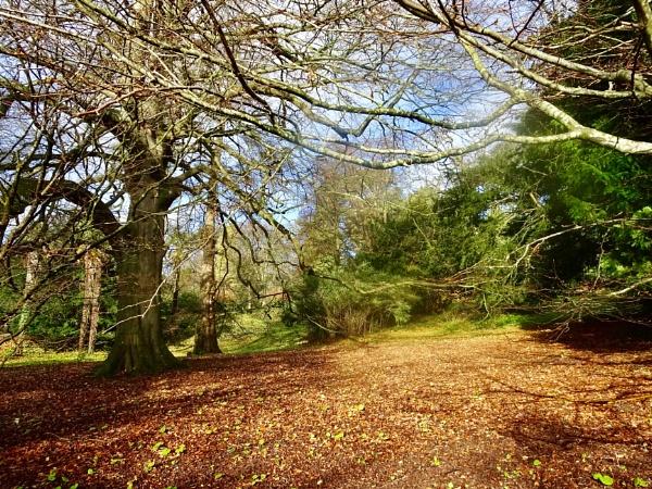 Autumn at Tyntesfield by dixy