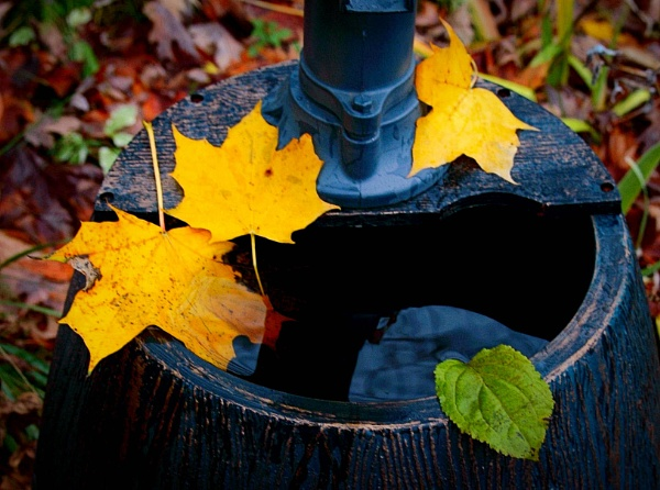 Fountain & Color Leaves by manicam