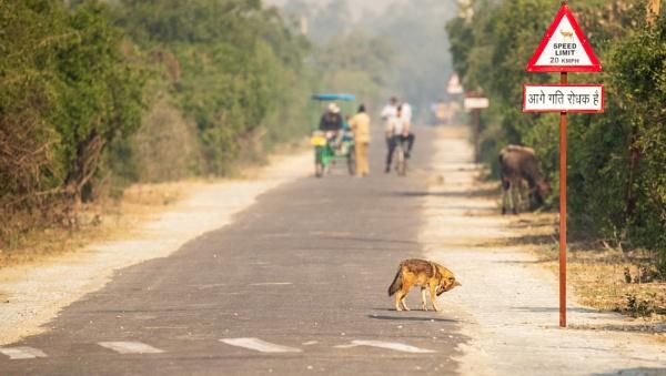 Bharatpur Bird Reserve transport by suejoh