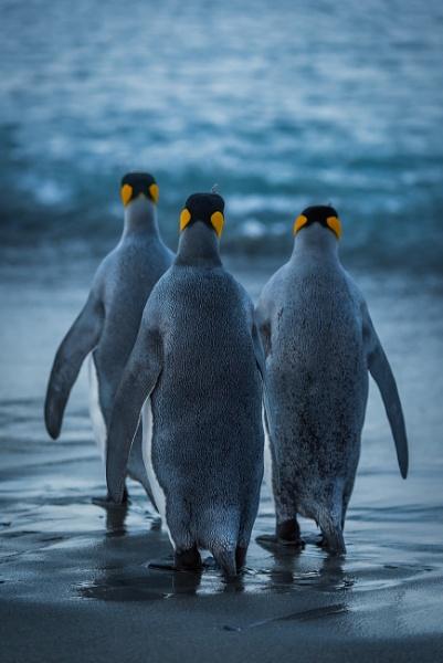 We Three Kings by NickDale