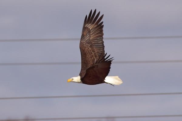 Eagle 1 by GGAB