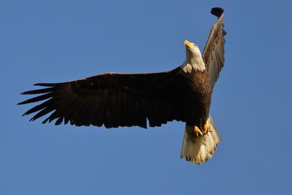 HandHeld Eagle 1 by GGAB