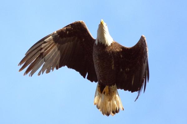 HandHeld Eagle 2 by GGAB