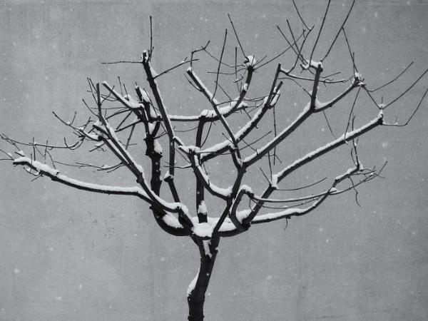 december tree by leo_nid