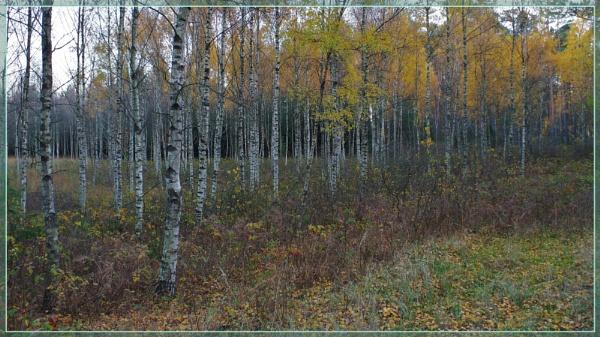 Autumnal Gleam Series #61 by PentaxBro