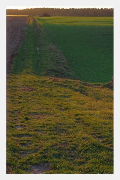 Autumnal Gleam Series #90 by PentaxBro