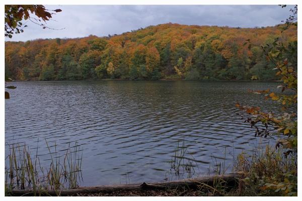Autumnal Gleam Series #33 by PentaxBro